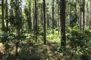 Sand Springs Creek Hunting and Timber Investment