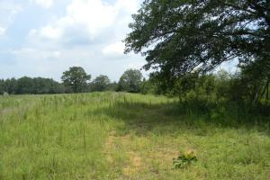 Bailey Springs Farm & Recreation Tract in Calhoun, AL (7 of 9)