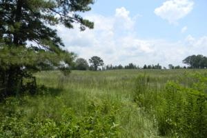 Bailey Springs Farm & Recreation Tract in Calhoun, AL (4 of 9)
