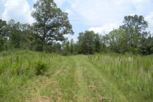Bailey Springs Farm & Recreation Tract in Calhoun, AL (9 of 9)