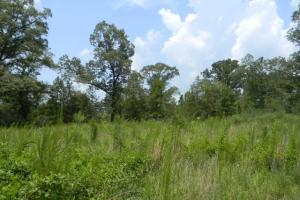Bailey Springs Farm & Recreation Tract in Calhoun, AL (6 of 9)