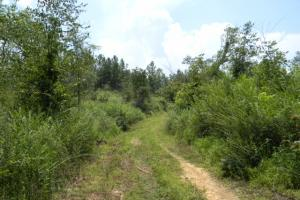 Bailey Springs Farm & Recreation Tract in Calhoun, AL (8 of 9)