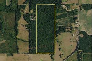 County Road 34 Timber Investment - Cherokee County AL