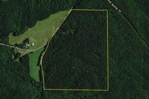 Bluff Springs Timber and Hunting Tract - Clay County AL