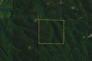 Bluff Springs Timber and Hunting Tract 2 - Clay County AL