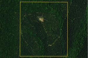 Millerville Timber Tract - Clay County AL