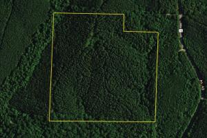County Road 49 Timber Tract - Clay County AL