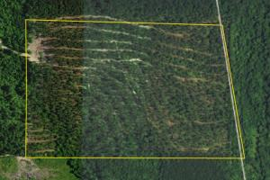 State Line Timber Investment - Cleburne County AL