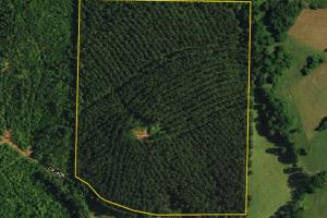 Woodland Timber Investment - Randolph County AL