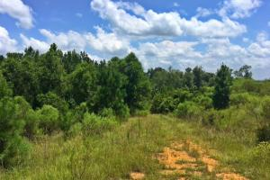 Legacy Shores East River Property - Wilcox County AL