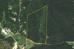 County Road 446 Timber and Hunting Tract - Randolph County AL