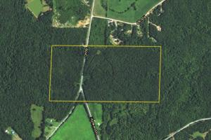 County Road 39 Timber Investment