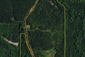Chambers County Timber Investment - Chambers County AL