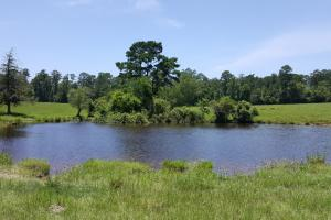 110 acre Trinity County Ranch/Homesite