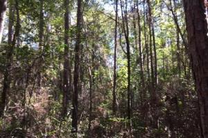 McIntosh Timber and Recreation Tract - Washington County AL