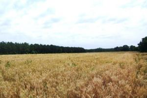 Photo 3 of 7  ·  land for sale in al,farm land for sale in al,timber land for sale in al