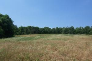 Burnsville Farm and Timber Investment - Dallas County AL