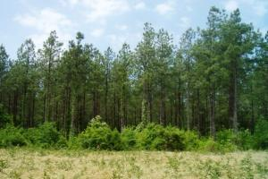 Photo 2 of 7  ·  land for sale in al,farm land for sale in al,timber land for sale in al