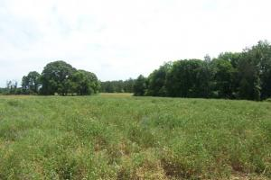 Photo 5 of 7  ·  land for sale in al,farm land for sale in al,timber land for sale in al