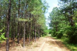 Photo 4 of 7  ·  land for sale in al,farm land for sale in al,timber land for sale in al