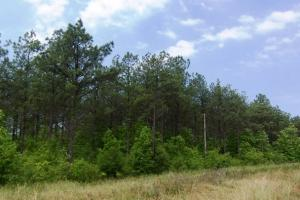 Photo 6 of 7  ·  land for sale in al,farm land for sale in al,timber land for sale in al