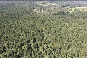 Polk County Hunting/Timberland with Development Potential