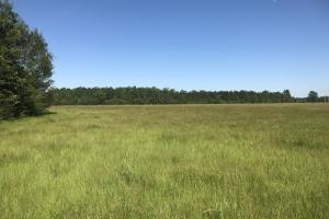 Flat Field Ranch and Farm - Escambia County AL