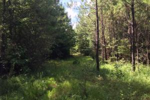 Marshall Road Homesite or Hunting Tract in Elmore, AL (2 of 6)