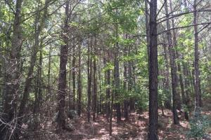 Marshall Road Homesite or Hunting Tract