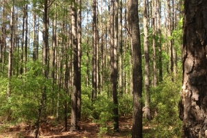 Wooded Large Acre Homesite - Horry County SC