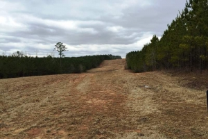 Agricultural & Timber Investment - Lee County AL