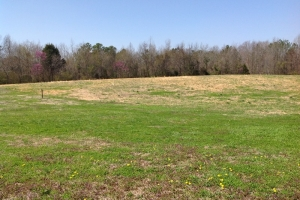 Farming Estate Tract - Morgan County AL