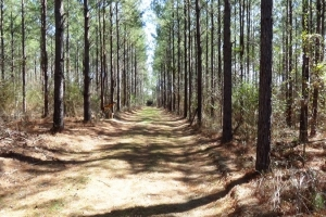 Hunting Homesite - Hale County AL