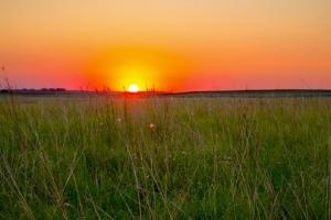 Cropland & Grass For Sale - Cheyenne County, CO - Cheyenne County CO