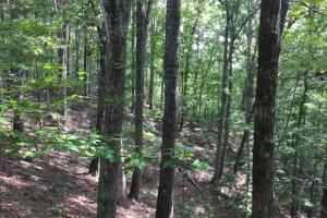 Smalley Ridge Tract - Roane County TN