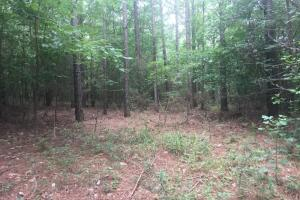 Jones Road Hunting and Timber Opportunity - Colbert County AL