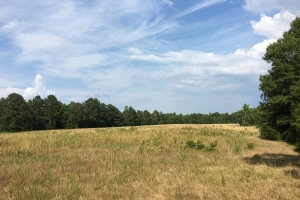 Farmland with Large Creek and Hardwoods - Abbeville County SC