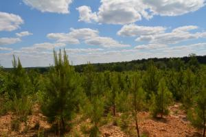 Sulligent Timber Investment and Recreation Property - Lamar County AL