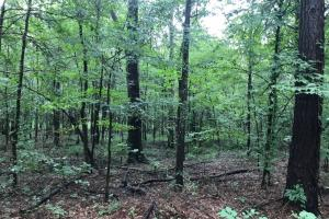 Hurricane Creek Weekend Retreat and Timber Investment - Dallas County AL