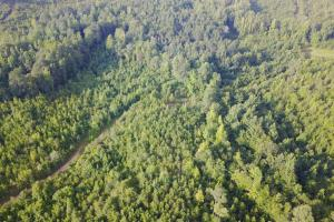 Tabernacle Road West Tract Hunting & Timber - Tuscaloosa County AL