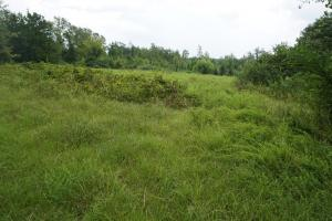 Sandy Fork Road Homesite Parcel 2 - Hale County AL