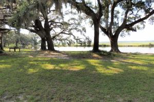 <p>Live oaks overlooking fish pond and Savage Creek.</p>