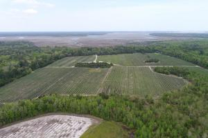 Coastal Blueberry Farm - McIntosh County GA