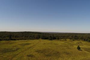 338+/- Acre Pasture and Timberland with Recreational Deer & Turkey Hunting