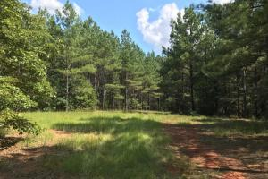 Secluded Recreation Property in McCormick, SC (2 of 4)