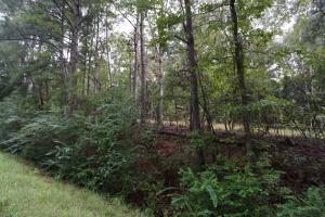 County Road 50 Homesite Parcel C - Hale County AL