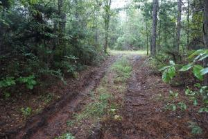 County Road 50 Homesite Parcel 1 - Hale County AL