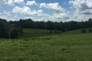 Cook Creek Road Cattle Farm - Colbert County AL