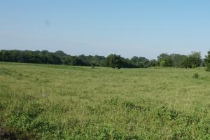 Coffee Creek Pasture and Homesite - Perry County AL