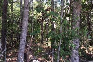 Talladega Commercial, Timber & Home Site Investment Tract - Talladega County AL